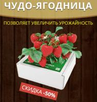 Чудо ягодница сказочный сбор купить Люберцах