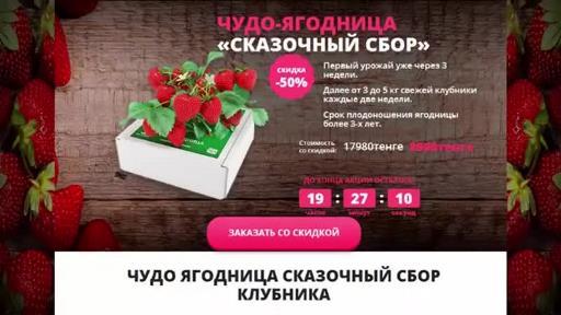 Купить домашнюю ягодицу клубники