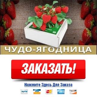 Купить саженцы клубники фриго в украине
