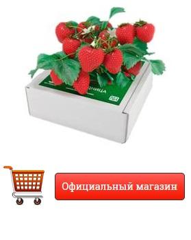 Где в Никополе купить ягодницу клубники