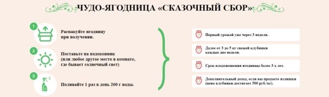 Где в АнжероСудженске купить ягодницу клубники